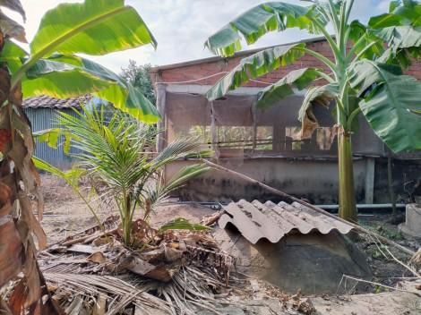 Chăn nuôi heo gây ô nhiễm môi trường ở xã Vĩnh Hòa, Ba Tri