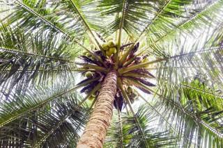 Bến Tre - Xứ Dừa - Quê hương Đồng Khởi (kỳ 1)