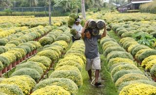 Chợ Lách vào mùa hoa kiểng Tết