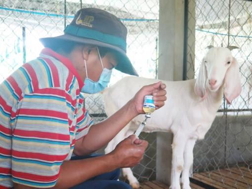Đoán sai bệnh vật nuôi có thể khởi kiện