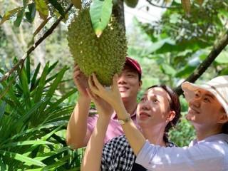 Tiềm năng phát triển du lịch 4 huyện cù lao Minh