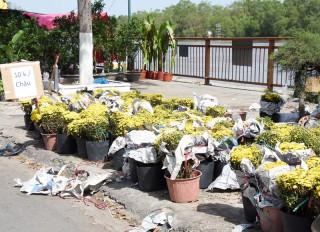 Chợ hoa 30 Tết - dội chợ, giá giảm sâu
