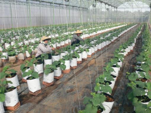 Hỗ trợ triển khai nghiên cứu, ứng dụng phát triển công nghệ cho nông nghiệp