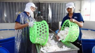 Đầu tư chế biến các sản phẩm từ dừa