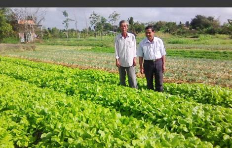 Tổ hợp tác trồng rau an toàn Tân Thủy