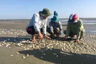 Nghêu chết hàng loạt tại Hợp tác xã thủy sản Rạng Đông