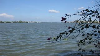 Độ mặn trên sông Cổ Chiên có xu hướng giảm