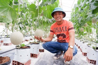Khởi nghiệp từ trồng dưa lưới trong nhà màng