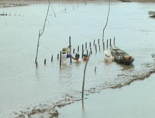 Phát triển bền vững nghề nuôi hàu