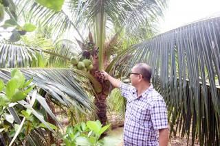 Phát triển chuỗi giá trị dừa thích ứng biến đổi khí hậu