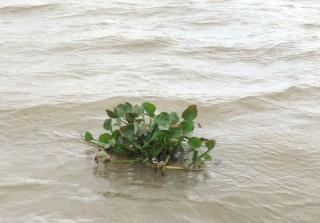 Độ mặn trên các sông chính tăng trở lại