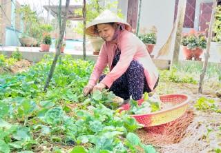 Lan tỏa hiệu quả mô hình trồng rau hữu cơ