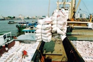 Kết luận của Phó thủ tướng về việc xuất khẩu gạo