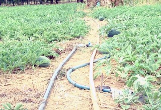 Bình Đại ứng dụng hiệu quả khoa học công nghệ trong sản xuất nông nghiệp