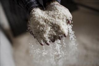 Malaysia ký hợp đồng nhập khẩu 100.000 tấn gạo từ Ấn Độ