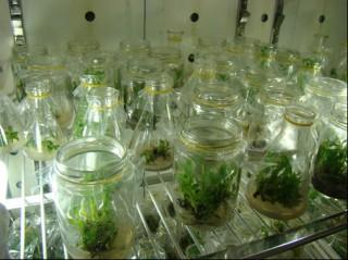 Đẩy mạnh ứng dụng công nghệ sinh học