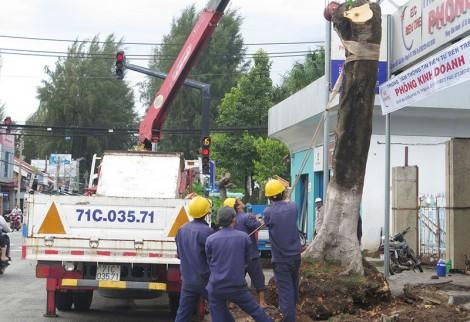 Tăng cường kiểm soát và quản lý cây xanh trong khuôn viên các cơ sở giáo dục