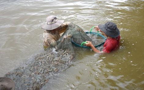 Thế mạnh kinh tế thủy sản