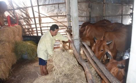 Thạnh Phú: Điểm sáng trong công tác giảm nghèo bền vững
