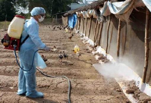 Vệ sinh, tiêu độc, khử trùng môi trường chăn nuôi