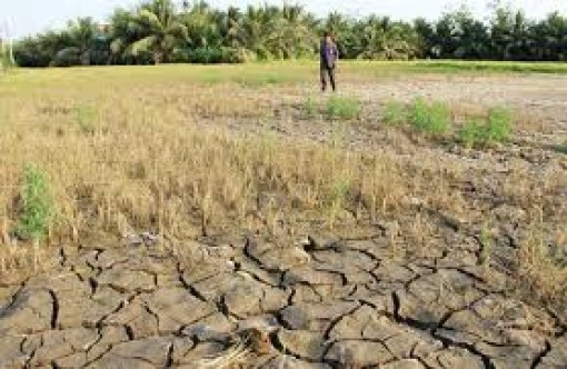 Sớm chủ động ứng phó hạn hán, xâm nhập mặn mùa khô 2020-2021