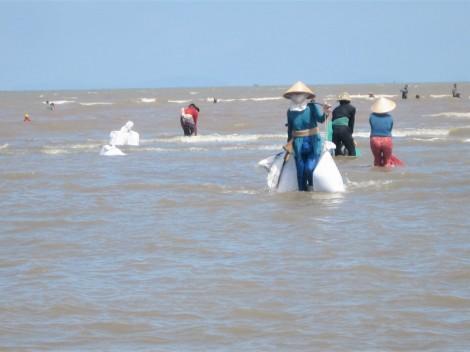 Hợp tác xã Thủy sản Đồng Tâm khai thác nghêu đạt doanh thu hơn 17 tỷ đồng