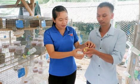 Khởi nghiệp từ mô hình nuôi chim yến phụng