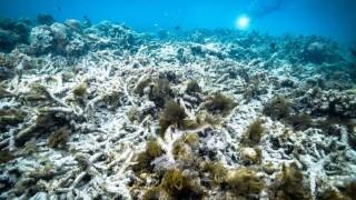 Australia không ký cam kết về bảo tồn thiên nhiên và đa dạng sinh học
